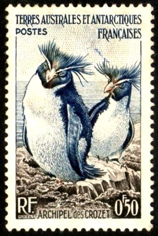 1956 Rockhopper Penguins