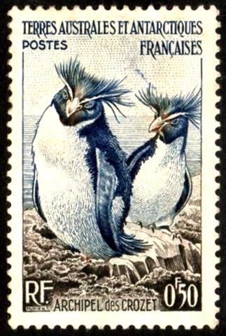 1956 Rockhopper Penguins